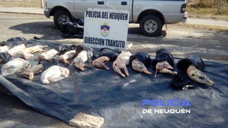 Transportaba 18 corderos faenados y sin cadena de frío en la caja de su camioneta