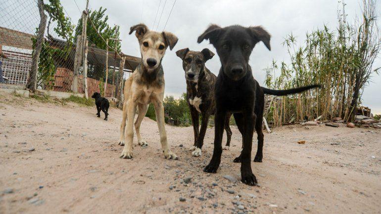 Preocupan los casos de rabia en perros callejeros