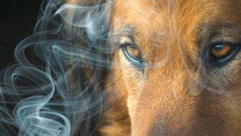Consecuencias del tabaquismo pasivo