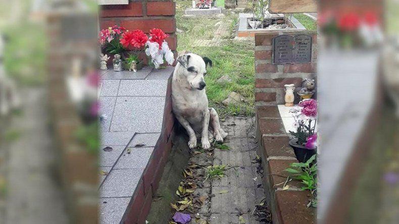 Como Capitán,  un perro no se aleja de la tumba de su dueño