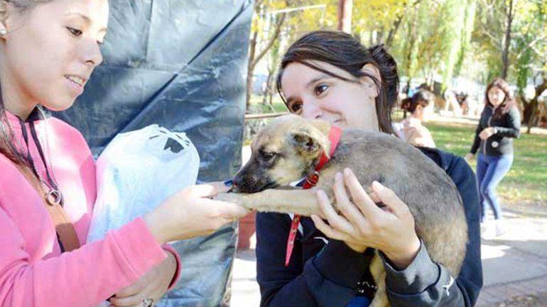 Ya entregaron 30 perros en adopción en lo que va del año