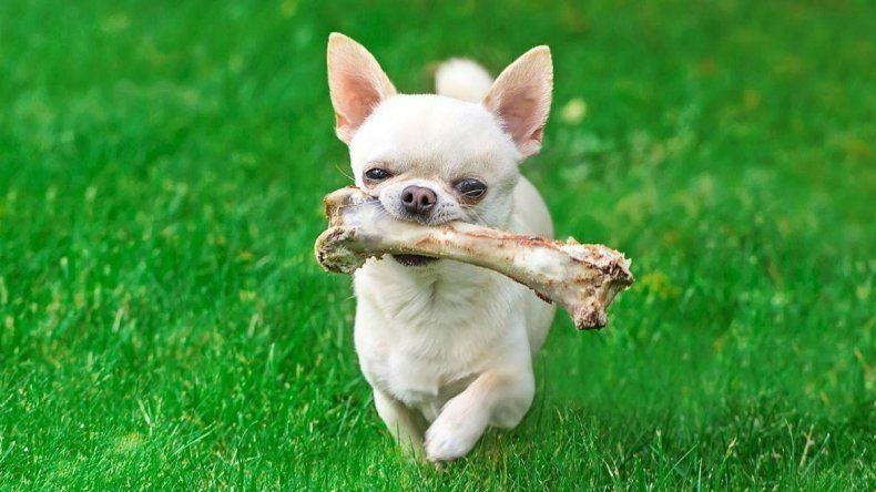 Los huesos, no tan amigos del perro
