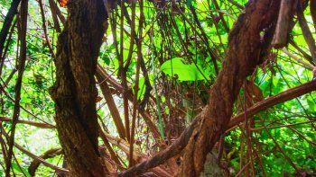 el uso de plantas alucinogenas en retiros puso en alerta a salud