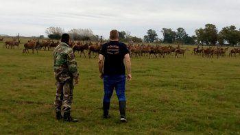 En el coto de caza ilegal había 150 ciervos colorados y 40 ciervos dama.