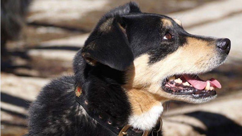 Pagan rescates para poder recuperar a sus mascotas