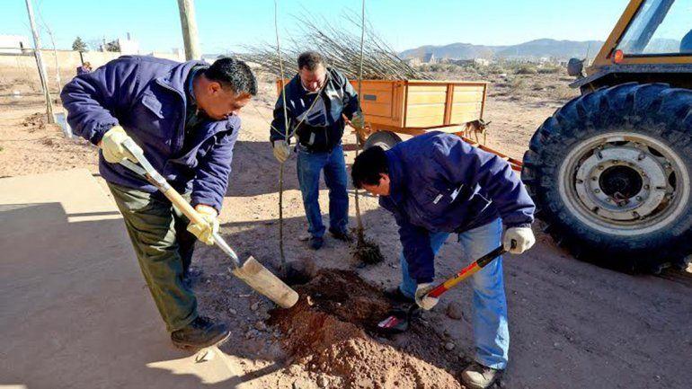 La Muni plantará diez mil árboles en toda la ciudad