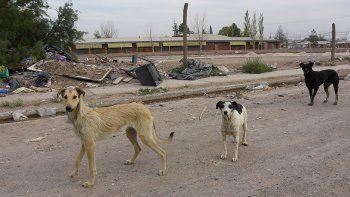 censo: quieren saber cuantos perros hay en la ciudad
