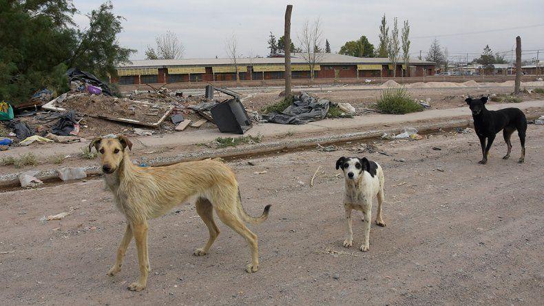 Quieren saber cuántos perros hay en la ciudad