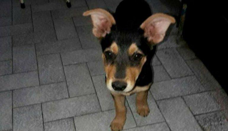 Córdoba: mató a una perrita porque le comió el asado