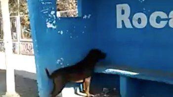 Insólito: un perro que lleva días mirando una pared