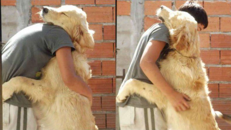 Tandil: apareció el perro por el que su dueña ofreció su auto como recompensa
