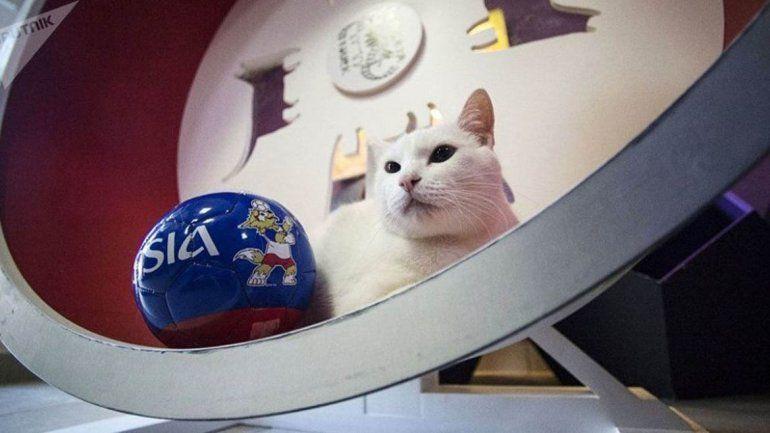 El gato Áquiles intentará emular al pulpo Paul a la hora de los pronósticos