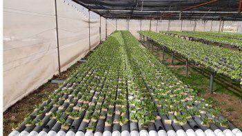 buscan apoyo para la produccion de verduras en agua