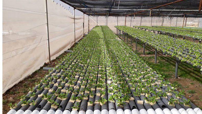 Buscan apoyo para la producción de verduras en agua