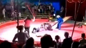 mira el feroz ataque de un oso al empleado de un circo
