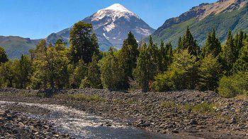 la restauracion de bosques neuquinos, modelo en el pais