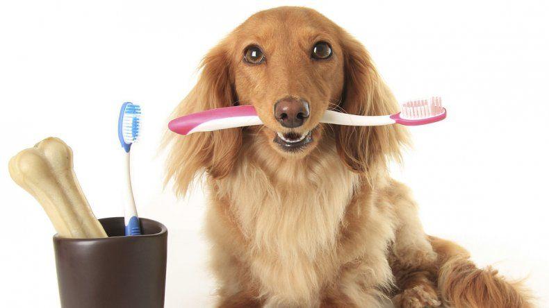 Hay que tener cuidado con los dientes