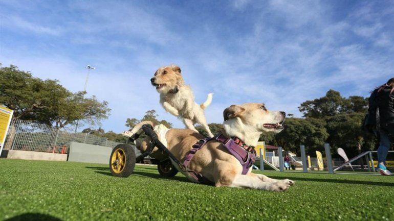 Inauguraron el primer parque de mascotas del país