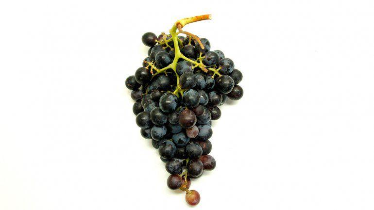 Investigadores del  INTA hallan 18 variedades de uva autóctonas