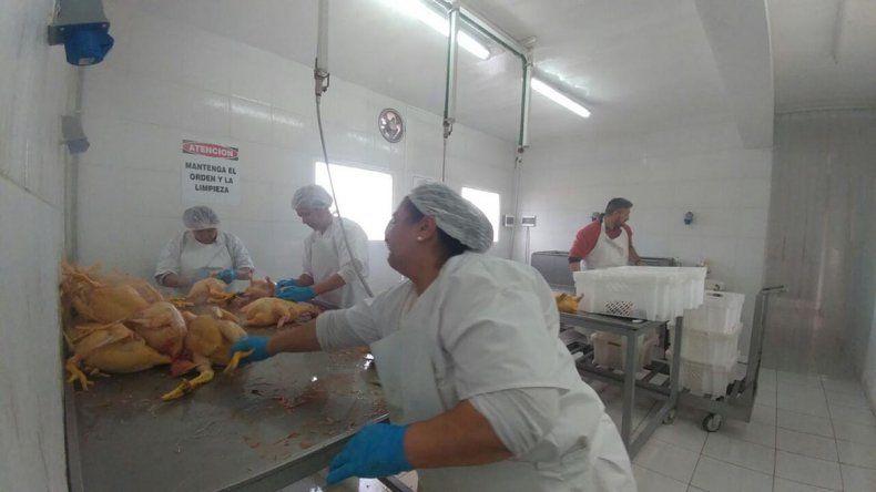 Enseñan a criar pollos como una salida laboral rápida