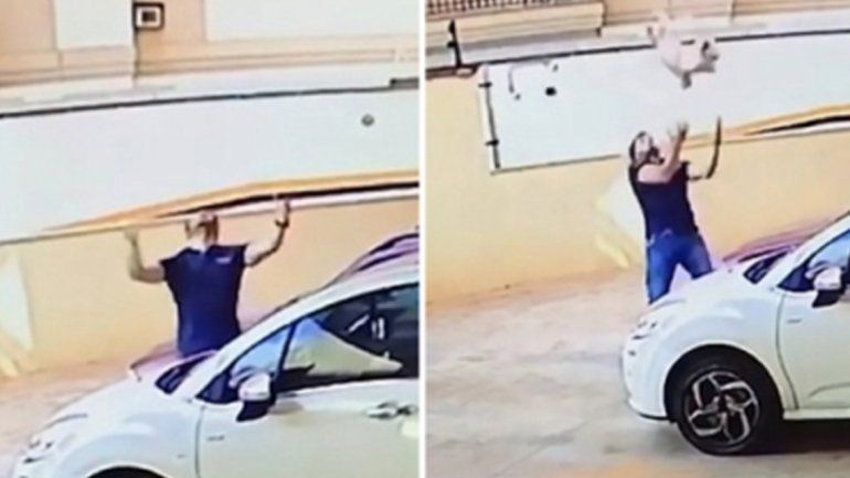 Un hombre salvó a una perrita que cayó del noveno piso de un edificio