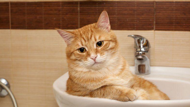 La tarea más difícil: darle un baño al gato