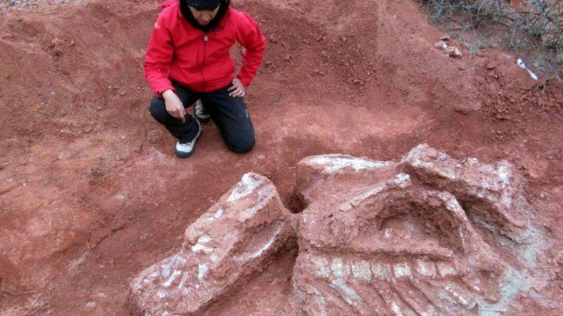 El hallazgo fue en el yacimiento Balde de Leyes y revolucionó las teorías sobre cuándo los dinosaurios comenzaron a volverse gigantescos.
