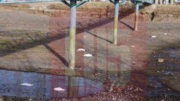 Los cisnes de cuello negro fueron atacados con un aire comprimido