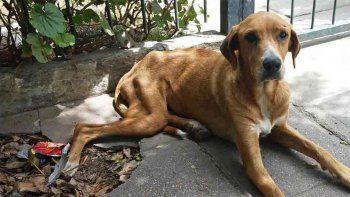 una perra callejera evito un robo y fue asesinada por un delincuente