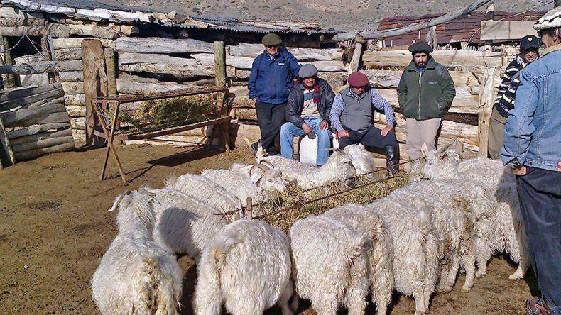 Los ganaderos tienen más tiempo para pedir plata
