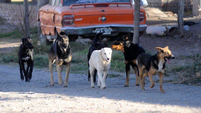 Gran revuelo por multas a quienes alimentan a perros