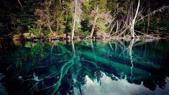 de recorrida: conoce por que el bosque sumergido de traful es una maravilla natural de neuquen
