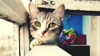 ¿Por qué los gatos escapan de la casa y luego vuelven?