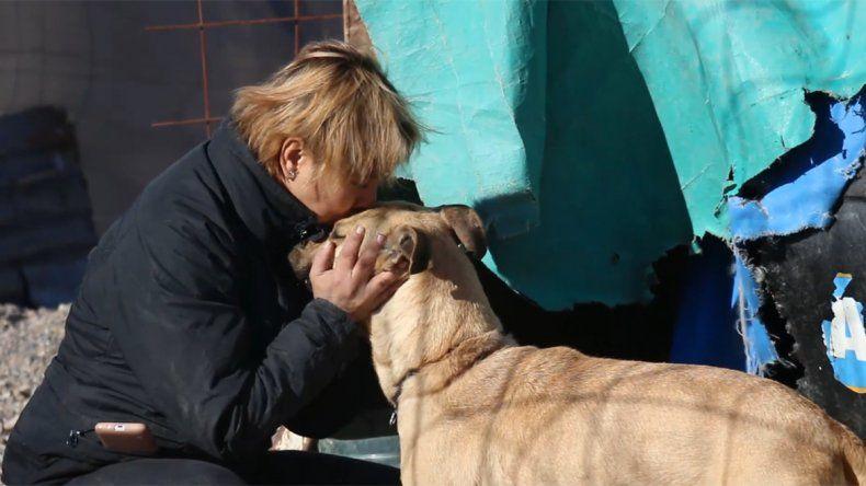 Restituirán dos perros a una proteccionista tras una disputa entre vecinos