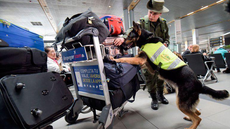 Narcos piden la cabeza de una perra antinarcóticos