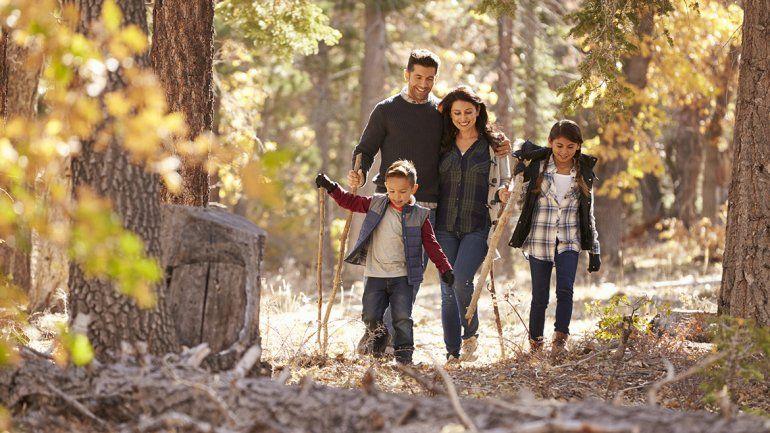Aseguran que caminar por el bosque puede curar