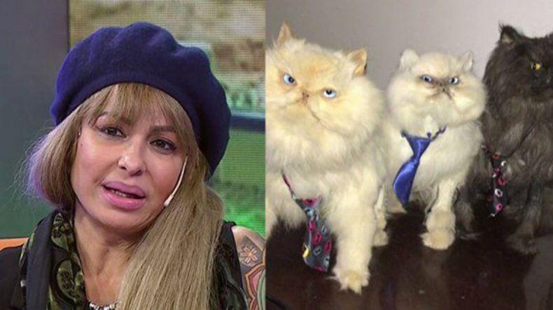 Daniela Cardone embalsamó a sus tres gatos y los puso en la mesita de luz