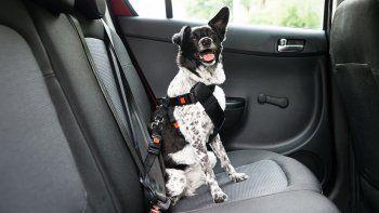 ¿Cómo deben viajar los perros en auto?