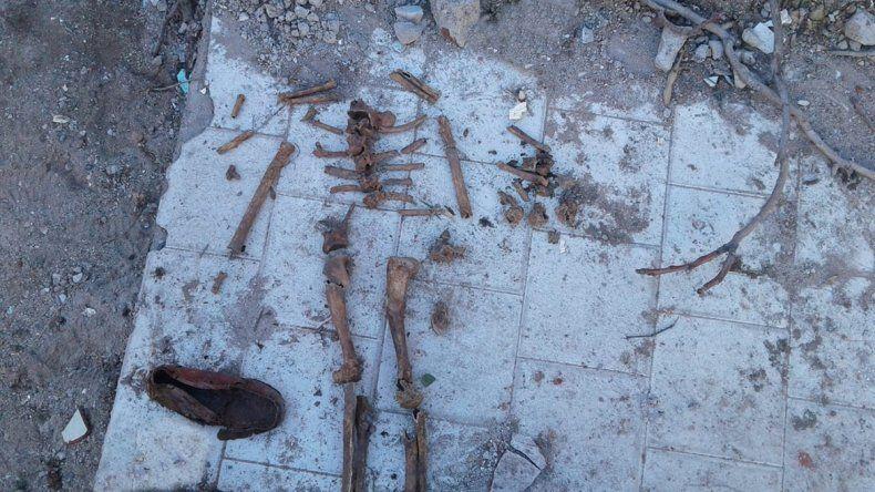 Encuentran restos óseos en una obra en construcción