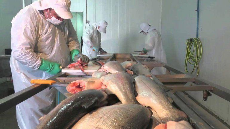 Procesar pescados para diversificar  la economía local