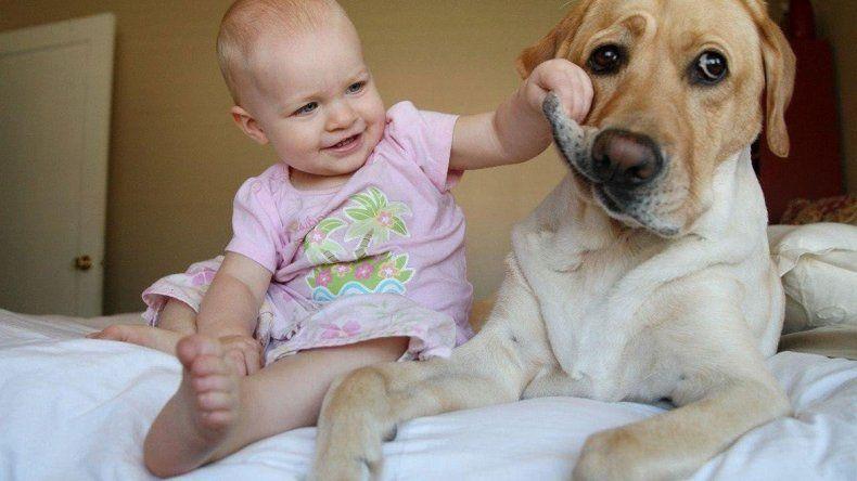 Adaptar al perro a la llegada de un bebé