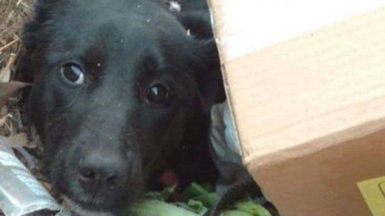 Vecinos crueles abandonan a sus perros en la basura