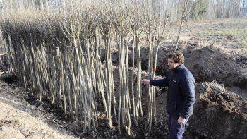 la muni sale a plantar 4 mil arboles durante todo el mes