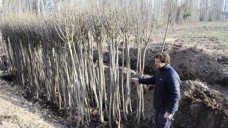 Plantarán 4000 árboles en veredas y espacios públicos