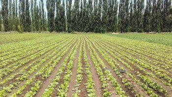 neuquen hace un salto de calidad en su horticultura