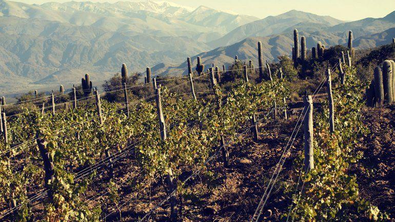 Claves de Terroir para los vinos de altura