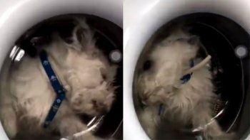 puso a su perrito en el lavarropas, lo grabo y lo compartio en las redes