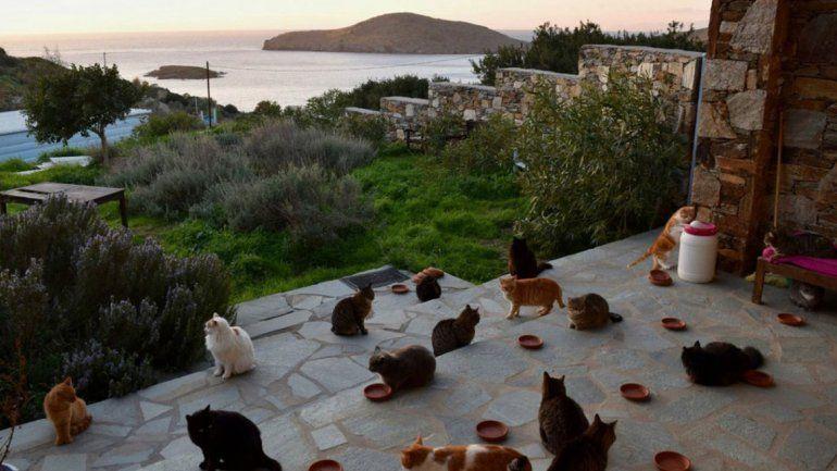 Buscan cuidador de 55 gatos en una hermosa isla griega