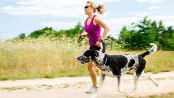 el perro, companero ideal para ir a correr