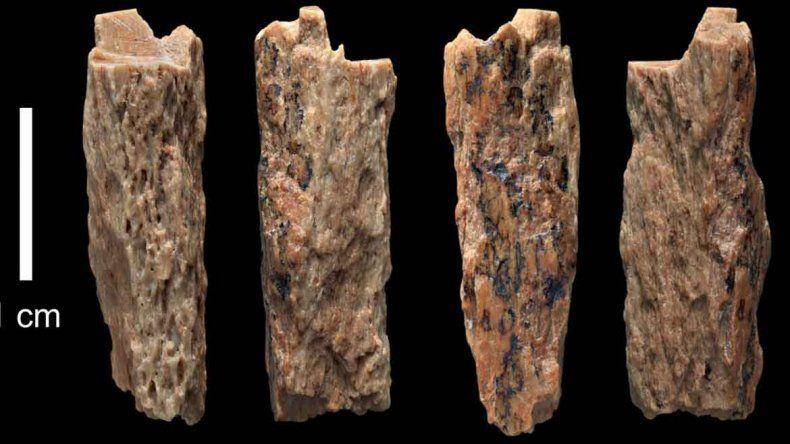 Es un trozo de fémur o antebrazo y contiene el ADN de ambos grupos.